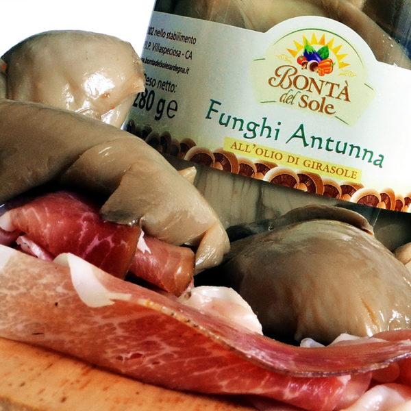 funghi-antunna-bonta-del-sole